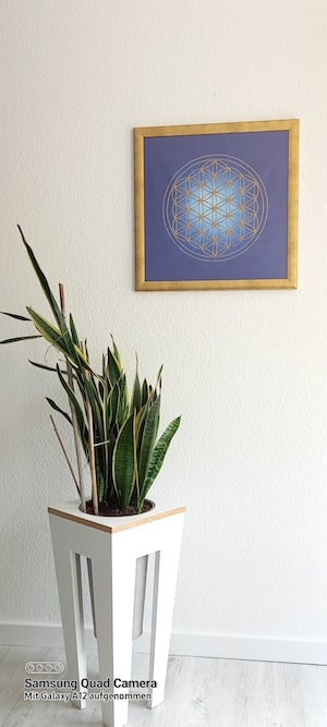 Die blaue Blume des Lebens als Poster mit goldenen Rahmen auf weißer Wand